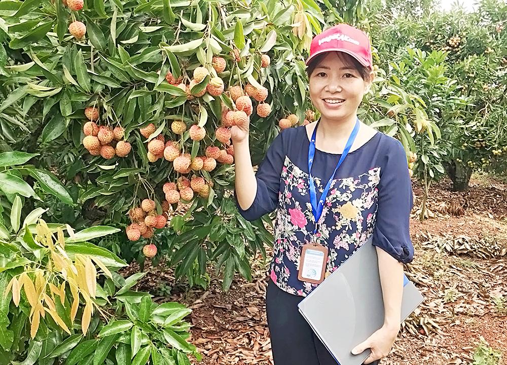 Chuyên gia đánh giá VietGAP tại trang trại Vải thiểu Lục Ngạn